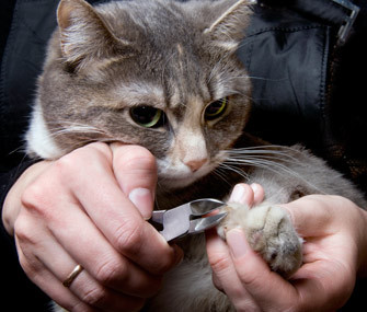 Cat Nail Clipping & Alternatives