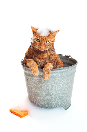 awesome cat cleaning (1)