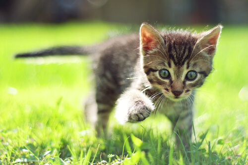 outdoors awesome cats
