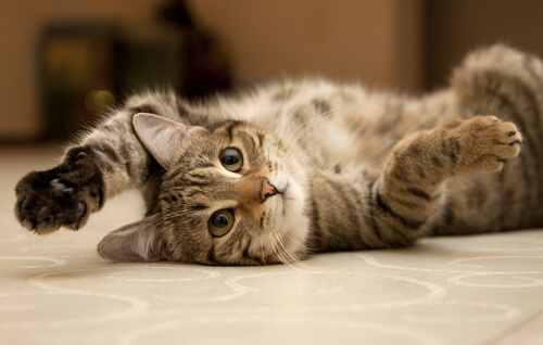 awesome cat pose (1)