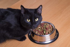 cat food allergies (1)