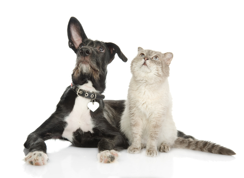 cats and dogs11