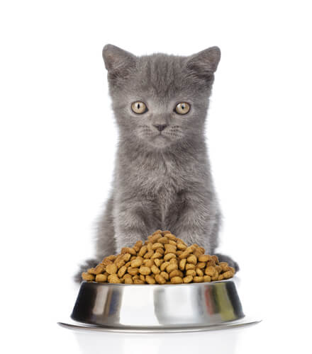 Best Cat Food To Prevent Shedding