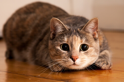 cats are so cute