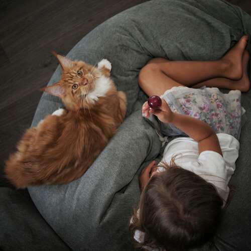 cute cat and person
