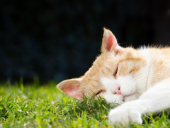 All About Ginger Cats Facts Lifespan And Intelligence