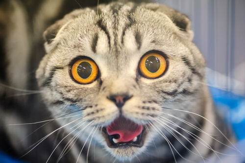 Why are cats so cute top 20 cute cat faces the im cute but still serious look voltagebd Image collections