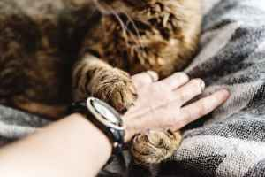 Why Do Cats Knead Their Owners?