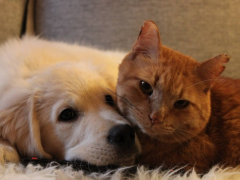 cats and dogs friendships