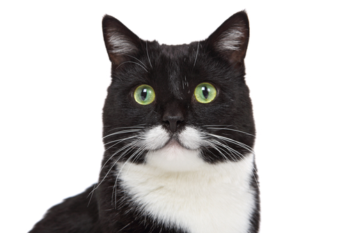 130 Black And White Cat Names We Re All About Cats