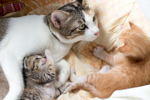 Pregnant Cat Labor Signs Behavior And Timeline We Re All About Cats