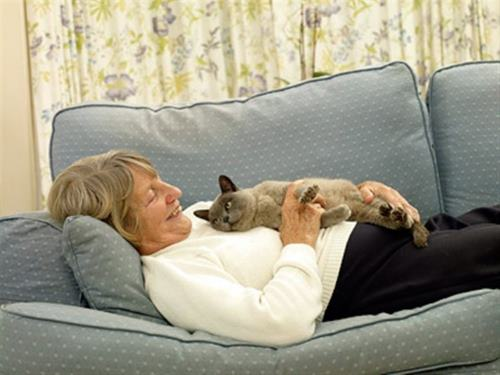 cats and old people