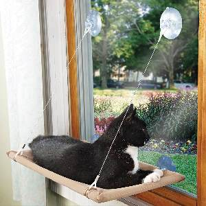 best cat window perch