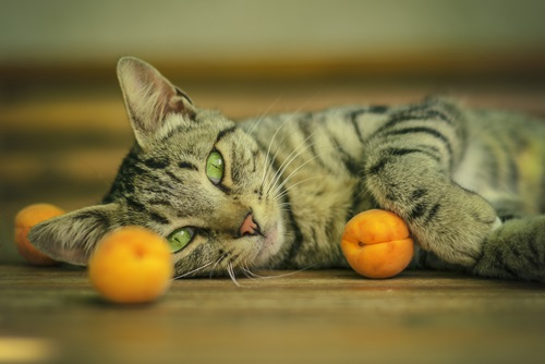 13 Safe Fruits For Your Cat We Re All About Cats