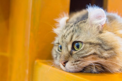 55 Most Popular Names for Tabby Cats - We're All About Cats