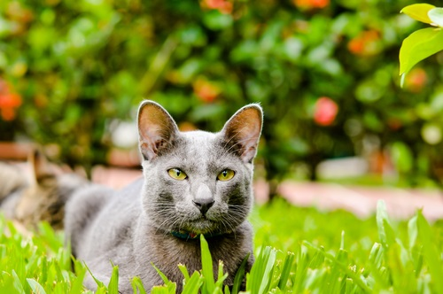 Best Cat Food To Prevent Constipation