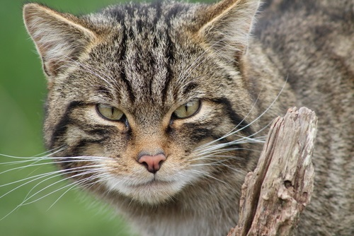 Most Popular Names For Striped Male Cats