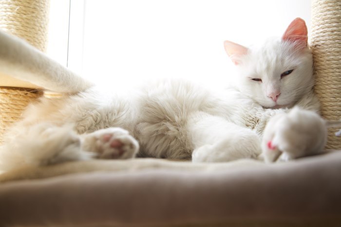 55 Most Popular White Cat Names Of 2019
