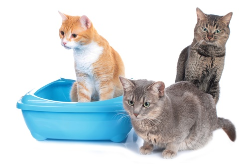 The 5 Best Cat Litter for Multiple Cats 2019: Unbiased