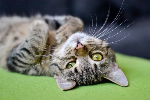Does Your Cat Need A Dewormer