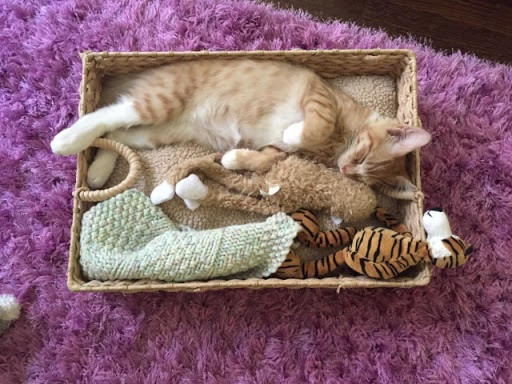 cat sleep box