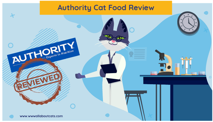 Authority cat food review