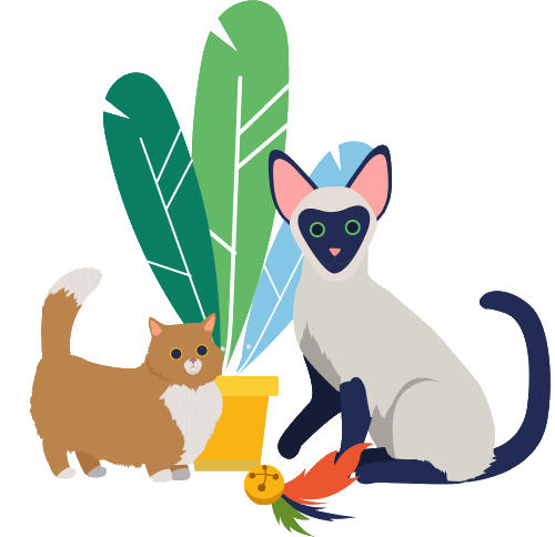 Cat Diet Depending on Breed and Age