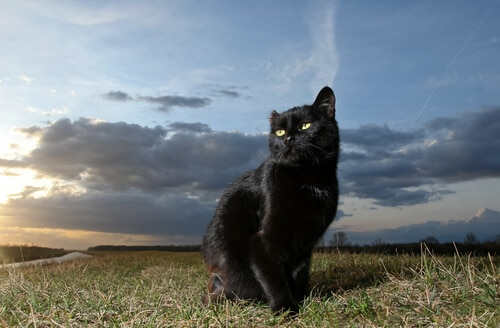 55 Amazing Names For Cats With Green Eyes