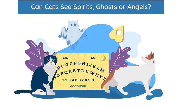 Can Cats See Spirits, Ghosts and Angels