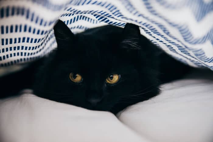 210 Popular Names For Black Cats We Re All About Cats