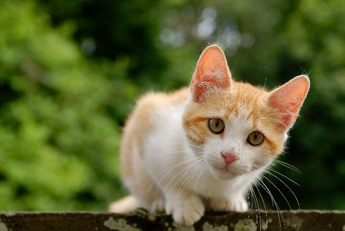 165 Orange Cat Names Male Female Unisex Names We Re All About Cats