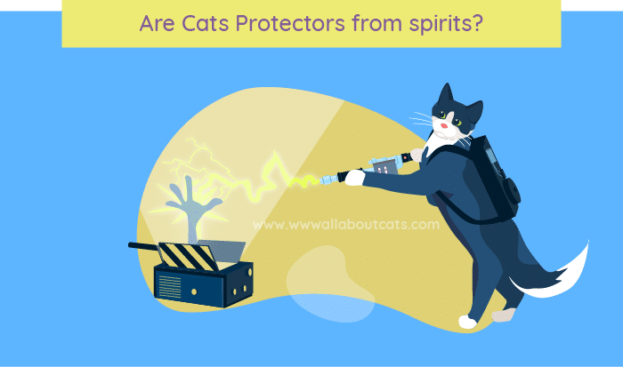 Are Cats Protectors from spirits