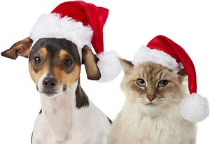 Save up to 60% on all pet apparel