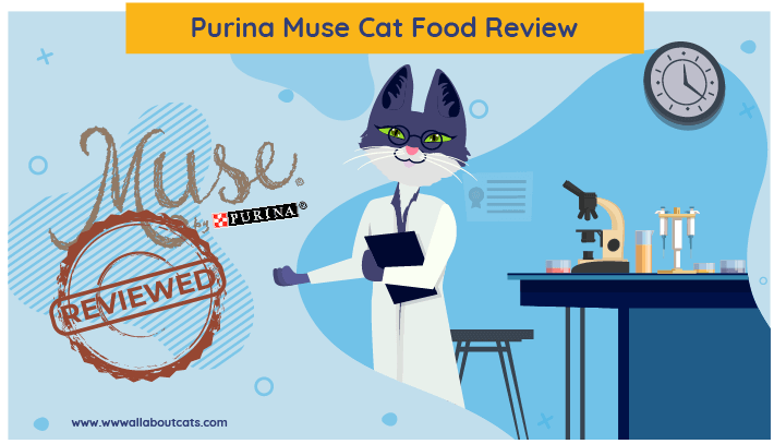 muse cat food review