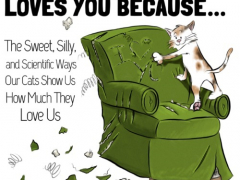 You Know Your Cat Loves You Because…