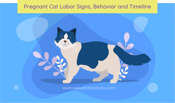 Pregnant Cat Labor Signs, Behavior And Timeline- We're All About Cats