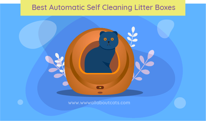 self clean litter box