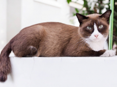 Brown and White Cat Sitting on White Platform