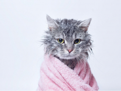 wet cat wrapped in a pink towel