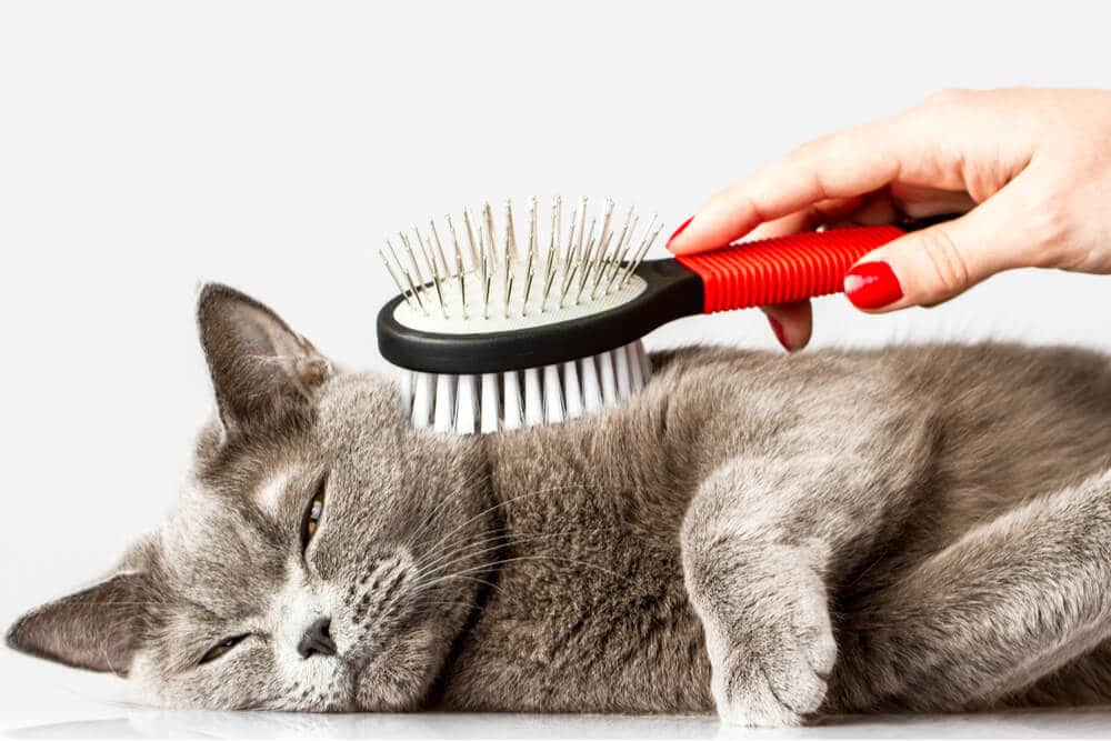 Relaxed cat being brushed to prevent hairballs