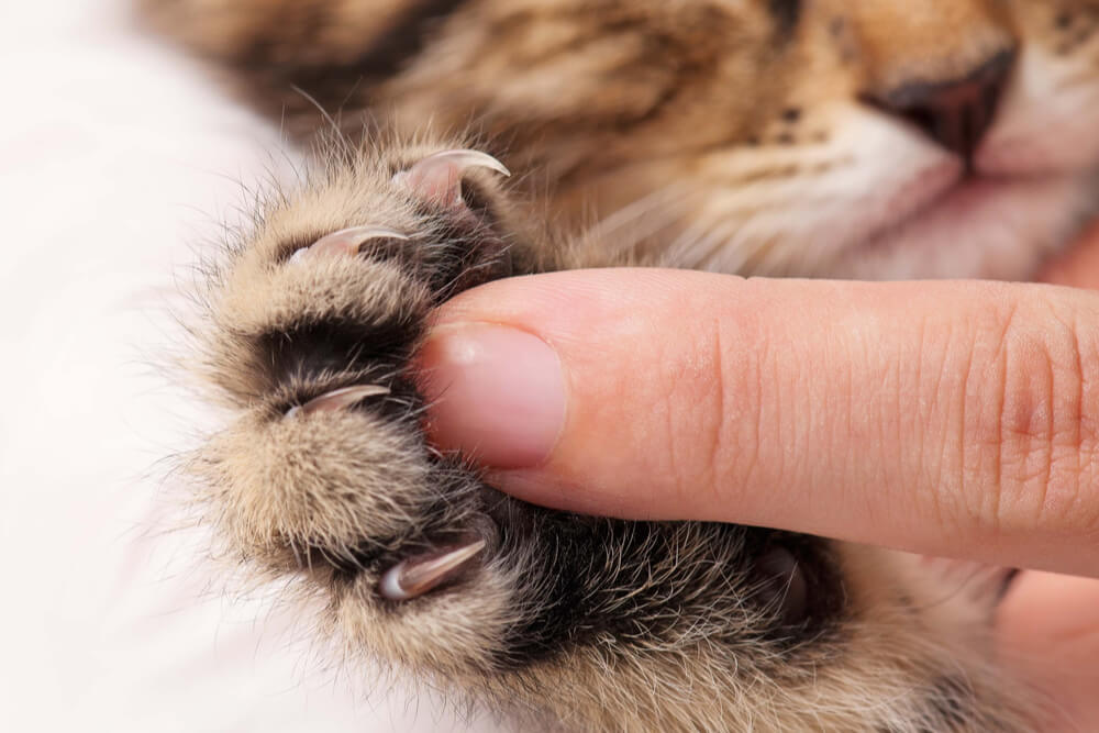 Close up of a kitten's paw with a human finger for contrast
