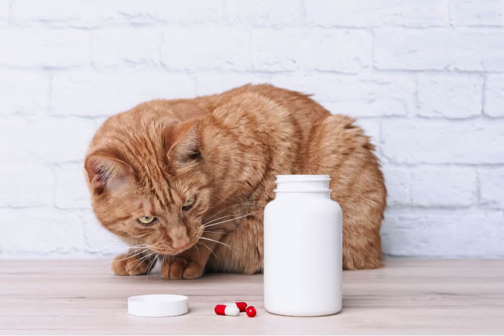 Cat looking at pills as a common cause of poisoning in cats
