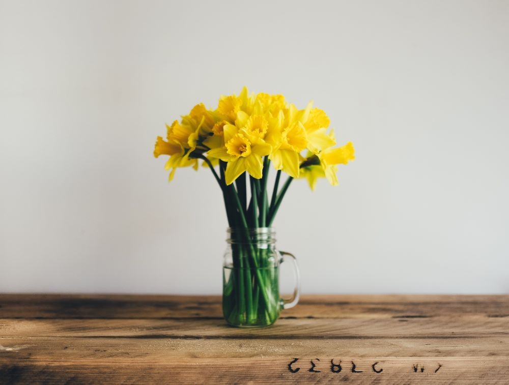 Yellow daffodils in a mason jar