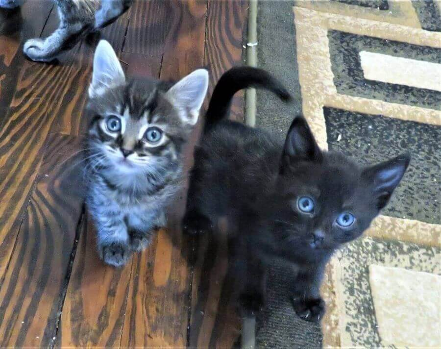 Two kittens on the floor at Kitty Mom's Rescue