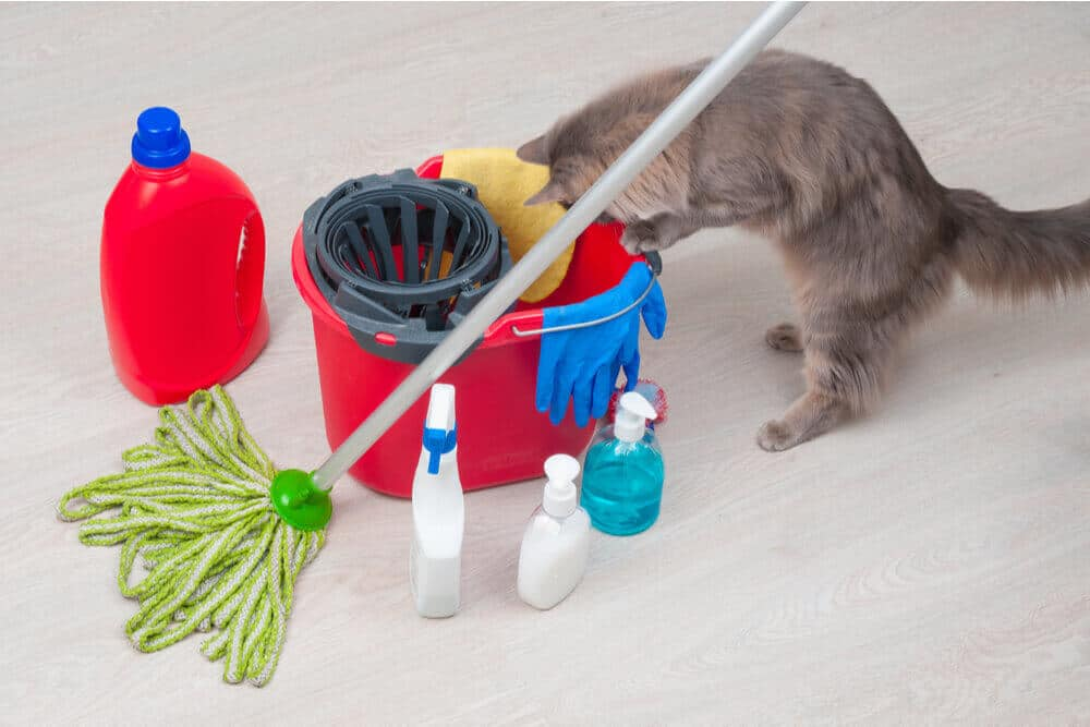 How do cats get poisoned? Household cleaners are one common cause.