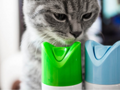 Signs of Cat Poisoning Feature Cat Sniffing Aerosol Cans