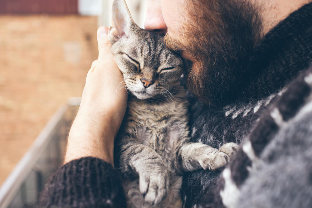 How to Make a Cat Love You Hugging