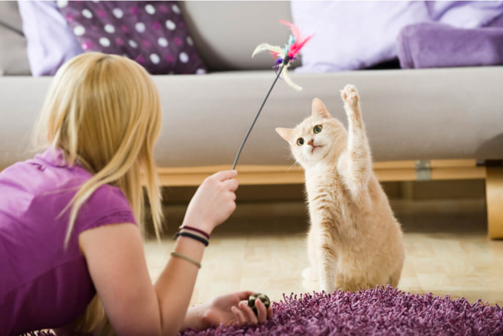 How to Make a Cat Love You Play