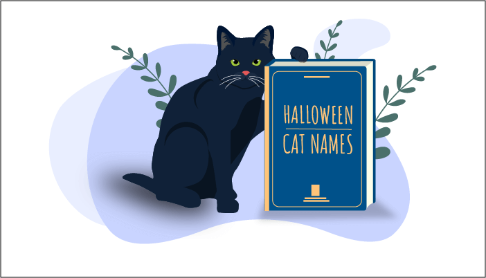 100 Popular Halloween Cat Names We Re All About Cats