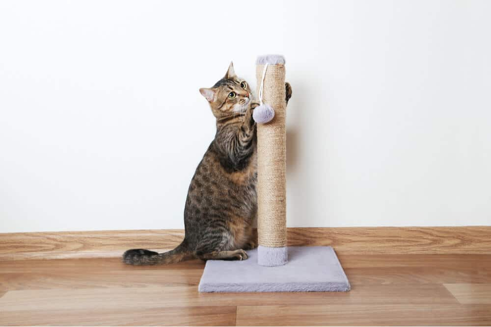 Cat scratching sisal scratching post